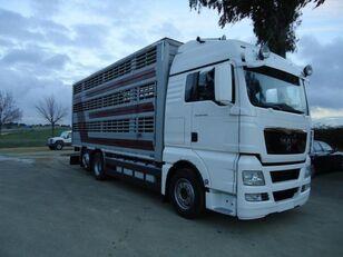 MAN TGX 26 480 kamion za prijevoz stoke